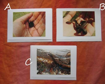 Snake Photo Card YOU CHOOSE ONE - 5 by 7 Wildlife Nature Cards, Pick the 1 You Want or Buy All 3, Nature Photography Wildlife Snakes Racer