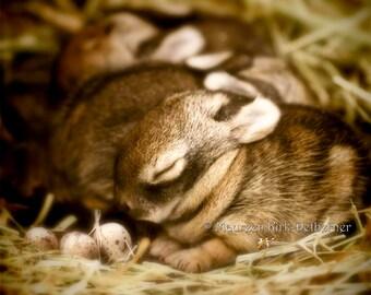 Rustic nursery, rustic nursery print, art print, baby rabbit, farm animal print, nursery decor, baby room decor, earth tones, nature print