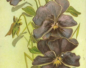 Purple Violets Trimmed in Gold Elegant Embossed Antique Postcard with Closed Post Office Cancel 1911 Kinnear's Mills Quebec