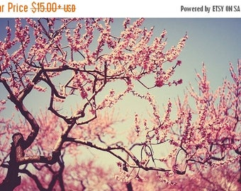 Nature photography Color: Cherry Blossoms Fine Art Photo Spring Whimsical wall art botanical art prints Cherry blossom tree branches