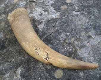 Vintage Weathered Cow Horn