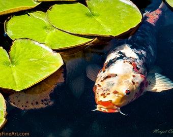 Koi Pond Photograph,