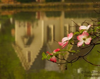 Pink Dogwood Flowers and Old Library Reflection, Spring Photograph, Lake Afton, Yardley, Bucks County, Pennsylvania, Fine Art Photography