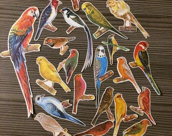 Set of 20 Cut Outs from Vintage Book Birds Animals