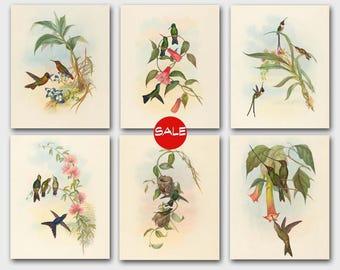 Set of Hummingbird Prints (Antique Birds Print, Vintage Home Decor) John Gould Artwork - Set of 6 Bird Prints - SALE