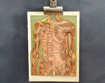 1921 Anatomy Illustration, Anatomy Wall Art,  Interactive Illustration with Fold Out Sections, FREE SHIPPING
