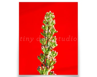Red and Green Art Print - Arts District LA, Floral, Bright Red, Plants