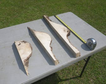 UNFINISHED Live Edge Slab Set of 3 Southern MAGNOLIA Natural Edge Set, Perfect for DIY, Raw Wood Slab, Wood Worker Delight, Rustic Shelf 208