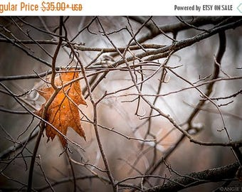 ON SALE Autumn, Tree Home Decor, Oak Leaf,  Nature Photography, Yellow, Orange, Autumn Leaf, Tree Branches, Dark, Forest
