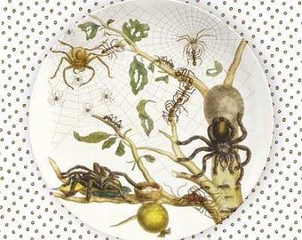 Spiders 1600's spider plate