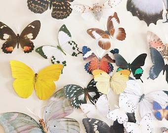 100 hand cut butterflies