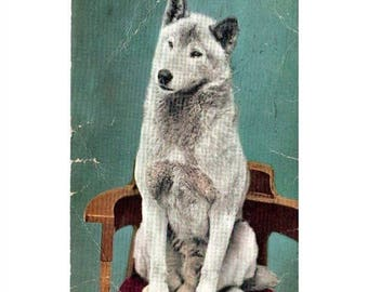 ON SALE Old Vintage Antique Postcard Colorized Photo Malumite Bob Eskimo Sled Dog by Edward H Mitchell 1909