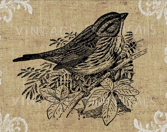 Sparrow Bird printable graphicInstant digital download image for iron on fabric transfer burlap decoupage paper pillow scrapbook tote  gt117