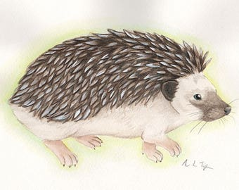 African Pygmy Hedgehog Original Artwork - Watercolour Mixed Media Painting, Gift idea for Hedgehog Lovers