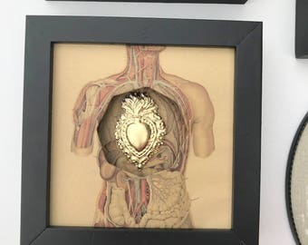 Frame curiosity the human body and his heart ex voto