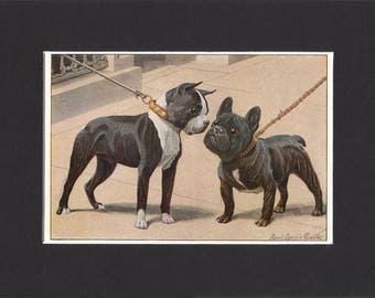 Boston Terrier 1919  Vintage Dog Print by Louis Agassiz Fuertes Small Print of Picture Mounted Boston Terrier Print French Bulldog Print