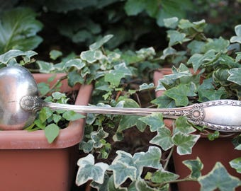 Important spoon, soup ladle, to clean. perfect for your Christmas parties. beautiful deco decorated laurel handle