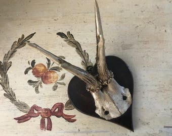 Roe Deer Trophy with Heart Shaped Plaque