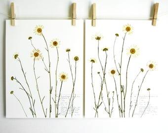 Daisy Print Set, #131ab, farmhouse wall art pressed daisy art wildflowers print set pressed botanical art white daisies art herbarium art