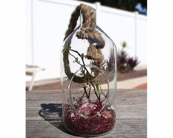Happiness and Friendship Crystal Terrarium | Crystal Terrarium | Gemstone Terrarium | Terrarium |