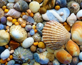 Laminated placemat pebbles and shells