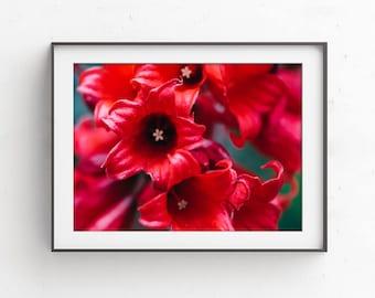 Red Flower Print, Nature Macro Art, Little Red Flowers, Nursery Wall Art, Flower Photography, Fine Art Photography, Floral Wall Decor, Print