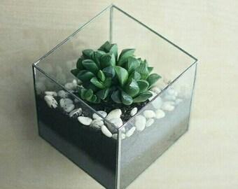 10 pcs wallmount cube terrarium 12*12
