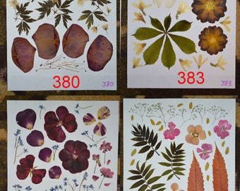 Pressed flowers, Pressed Petals, perfect for scrapbooking, woodworking decoration, candlemaking. #380, #383, #395, #340