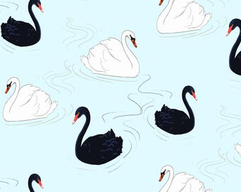 Swans, Matted Print