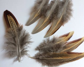 Lot of 7 Natural Delicate Feathers in Beige, Brown, Red