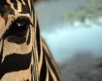 African Zebra Art Photo Print