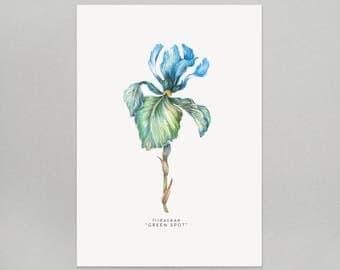 Iris A4 Giclee Print