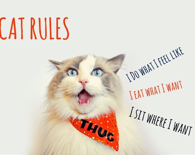Featured listing image: Thug cat bandana - bandanas for cats - bandanas with text - personalised cat bandana