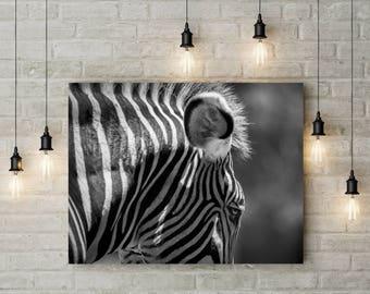 Zebra Print Wall Art Nature Photography Nursery Art Office Art Living