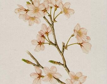 Flowers, Pink Flowers, Cherry Blossom, Sakura,Home Décor, Wall Printable, Wall Art, Digital Download, Printable Art, Wall Decoration.