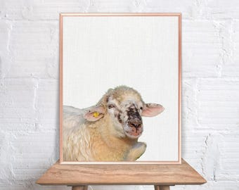 Sheep Wall Art / Sheep Home Decor / Sheep Print / Sheep Wallpaper Picture /  Sheep