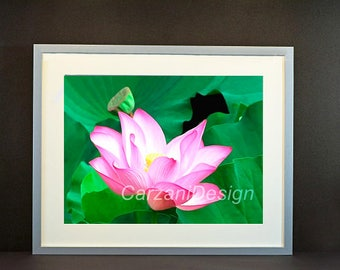 Framed photoprint of a pink Lotus flower, 19,68x15,74 inch