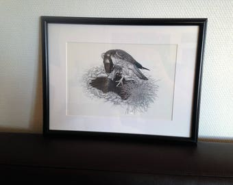 print the tawny - Peregrine Falcon and his prey - Pierre MOED - 1970/80