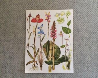 Genuine vintage large botanical drawing, bright flower illustration, botanical print, floral, green red bluetropical wall art gift
