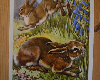 1950s Vintage Rabbit Illustration - Farmyard Friends