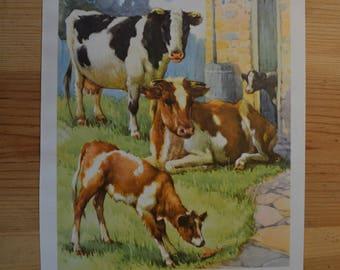 1950s Vintage Cow Illustration - Farmyard Friend Wall Decor