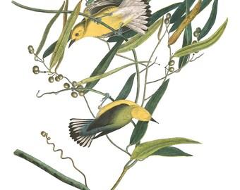 Audubon's Plate 3 Prothonotary Warbler Cross Stitch Pattern