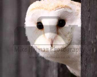 "Mounted Photographic Display Print - Barn Owl #1 (A4 print in 14"" x 11"" Mount, Unframed)"