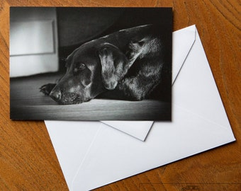 Labrador Gift Card -  'And... Rest!' - Original Photography