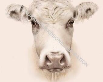 Cow, Illustration, Fine Art print, Giclee print, A4 print