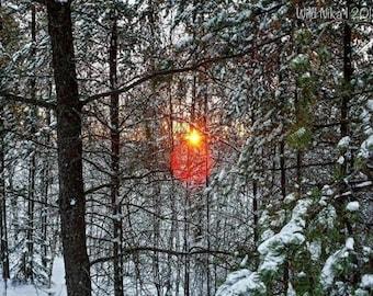 Sun Shining in the Wild