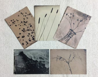 Photogram - Postcards (set of 5)