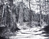 Forest Path: wall art decor, landscape, a hand pulled limited edition etching in black and white.