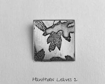 Hawthorn leaves 2 - Photoetched -  Ready to Send!