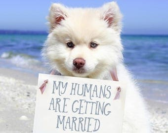 My Humans Are Getting Married Sign Custom Wedding Date | Engagement Announcement for Dog  | Puppy Proposal 1575 BW